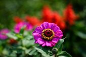 Purple Flower with Gold Rings