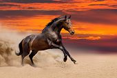 pic of desert animal  - Cute dark horse running in desert sand - JPG