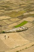 Fields In Nepal