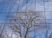 Reflection Of Trees In Winter On A Glass Wall