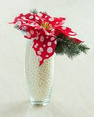 Composition From Poinsettia Plant With Spruce Branches In Glass Vase.