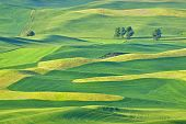 Beautiful Rolling Hills And Patterns In The Palouse In Washington State.