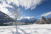 sun shining through single tree in idyllic winter snow landscape in austria