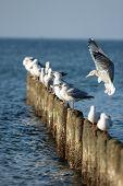gulls sitting on the breakwater