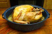 Thankgiving Turkey