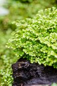 foto of fern  - ildenow - JPG