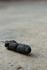 stock photo of feces  - Dog feces on the floor of cement - JPG