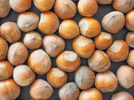 image of cobnuts  - Hazelnut dried fruits aka cobnut or filbert nut useful as background - JPG