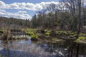 image of swamps  - Sunny and beautiful day at a swamp in Wawayanda State Park - JPG