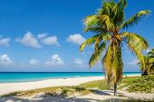 stock photo of caribbean  - Amazing sandy beach with coconut palm tree - JPG