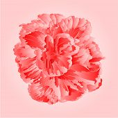 picture of hibiscus flower  - Tropical flower pink hibiscus blossom simple flower vector illustration - JPG
