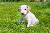 foto of little puppy  - Mixed - JPG