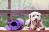 pic of beside  - Dog lies down beside yoga mat in the garden - JPG