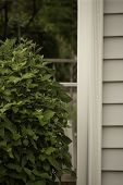 picture of shiting  - A bush of green leaves next to a shite post on a structure - JPG