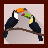 picture of toucan  - Toucans on a branch in flat style  - JPG