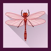picture of dragonflies  - Dragonfly in flat style  - JPG