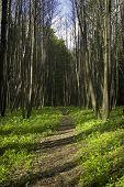 SPRIND Wald