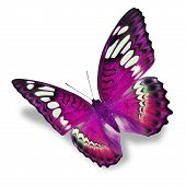 image of flying-insect  - Beautiful pink butterfly flying isolated on white background - JPG