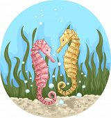 picture of seahorse  - Illustration of a Pair of Colorful Seahorses Hanging Together - JPG