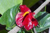 image of epiphyte  - Red flaming - JPG