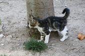 foto of baby cat  - Kitten. Baby cat. Little cute cat in garden. ** Note: Soft Focus at 100%, best at smaller sizes - JPG