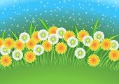 picture of dandelion  - Cartoon background with dandelion flowers and dandelion seeds flying in the air - JPG