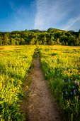 stock photo of wildflowers  - Wildflowers along a trail at Tom McCall Nature Preserve Columbia River Gorge Oregon - JPG