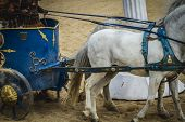 stock photo of chariot  - chariot race in a Roman circus - JPG