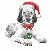 Постер, плакат: English Setter With Christmas Hat