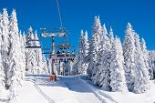 Vibrant active people winter image with skiers on ski lift, snow pine trees, blue sky