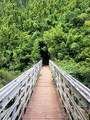 Bridge To Bamboo  Seven Sacred Pools  Maui 2