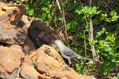 Mockingbird on the rocks