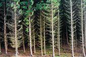 Floresta de recursos renováveis