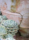 Cactus Flower And Pottery