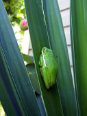 Tree Frog With Dirt Particles