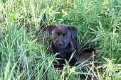 Black Puppy in Green Grass