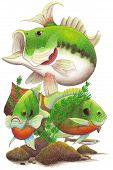 picture of bluegill  - Hand drawn colored pencil illustration of a collage with a bass - JPG