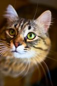 Portrait Of Striped Cat. Funny Kitty With Blurred Background. poster
