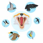 Fox Open Mouth Head And Foxes Food And Diet Of Birds Vector Illustration. Cartoon And Realistic Fox  poster