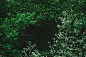 Natural Green Background Of Lush Thickets In Dark Forest. Darkness Behind Bewitched Branches Of Myst poster