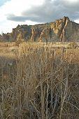 Cattails In The High Desert