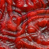 Red Lizard Skin