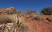 Cactus And Other Scub On The Red Desert Floor In Sedona.