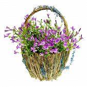 purple spring flowers in a basket