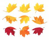 Maple Leaf In Red, Yellow, Brown And Green Isolated On White. Set Of Different Autumn Leaf Shape For poster