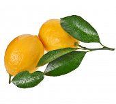 Fresh Lemon fruits isolated on a white background
