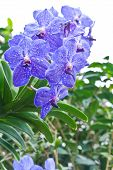 Purple Orchid Against Of Tropical Flowers