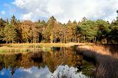Small Pond In Autumn Forest