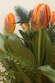 Bunch Of Tulips And Eryngium Or Bur
