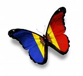 Moldavian Flag Butterfly, Isolated On White